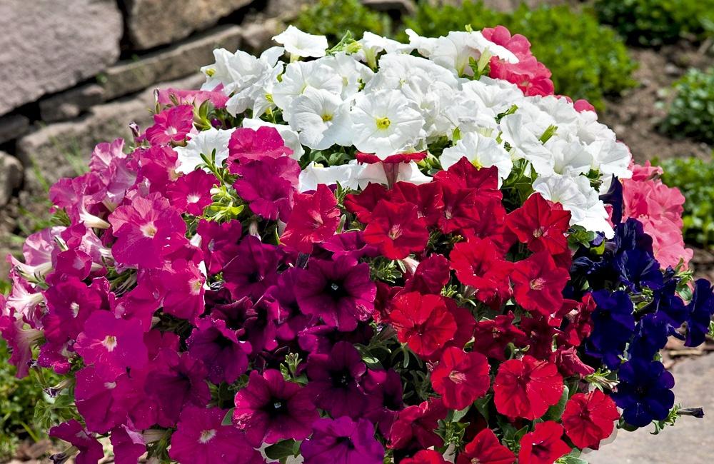 Beet und balkonpflanzen for Beet und balkonpflanzen