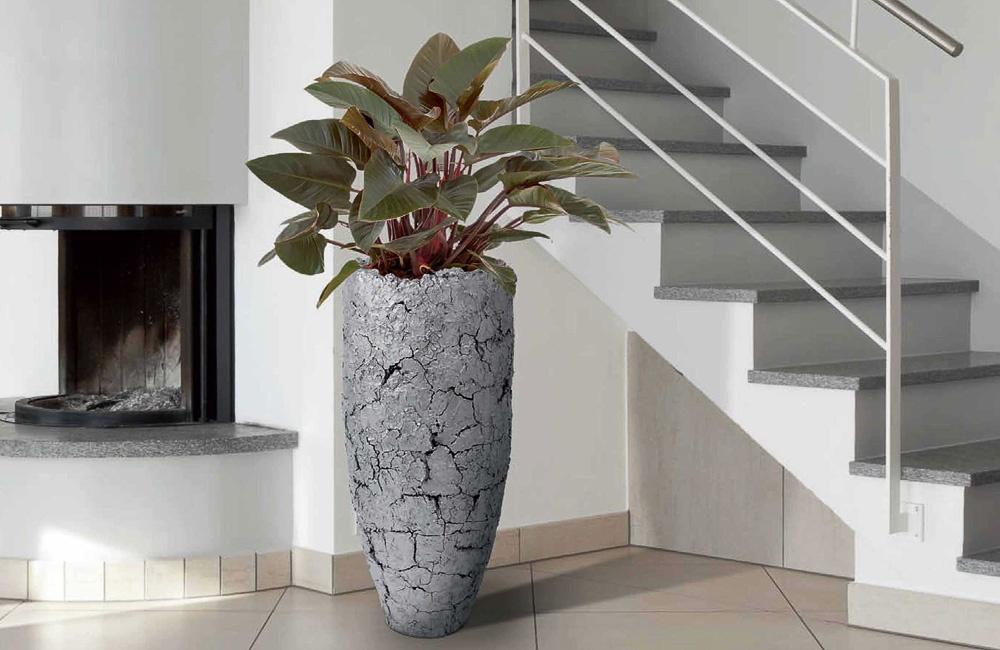Zimmerpflanzen for Design zimmerpflanzen