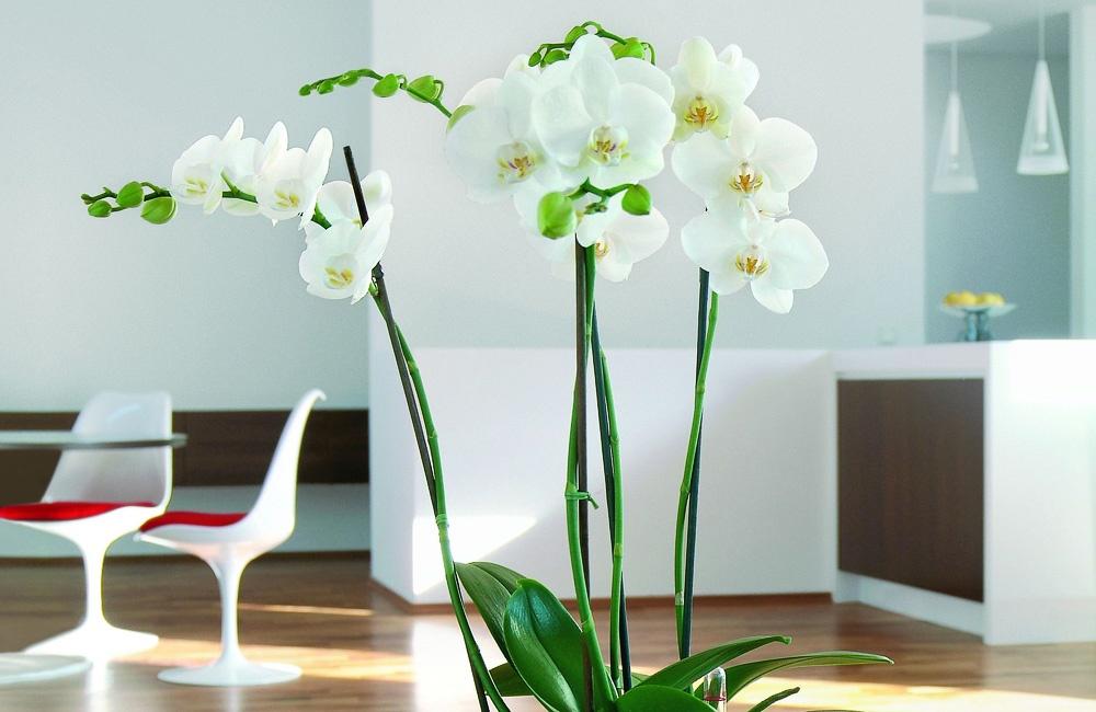 Zimmerpflanzen for Zimmerpflanzen trend